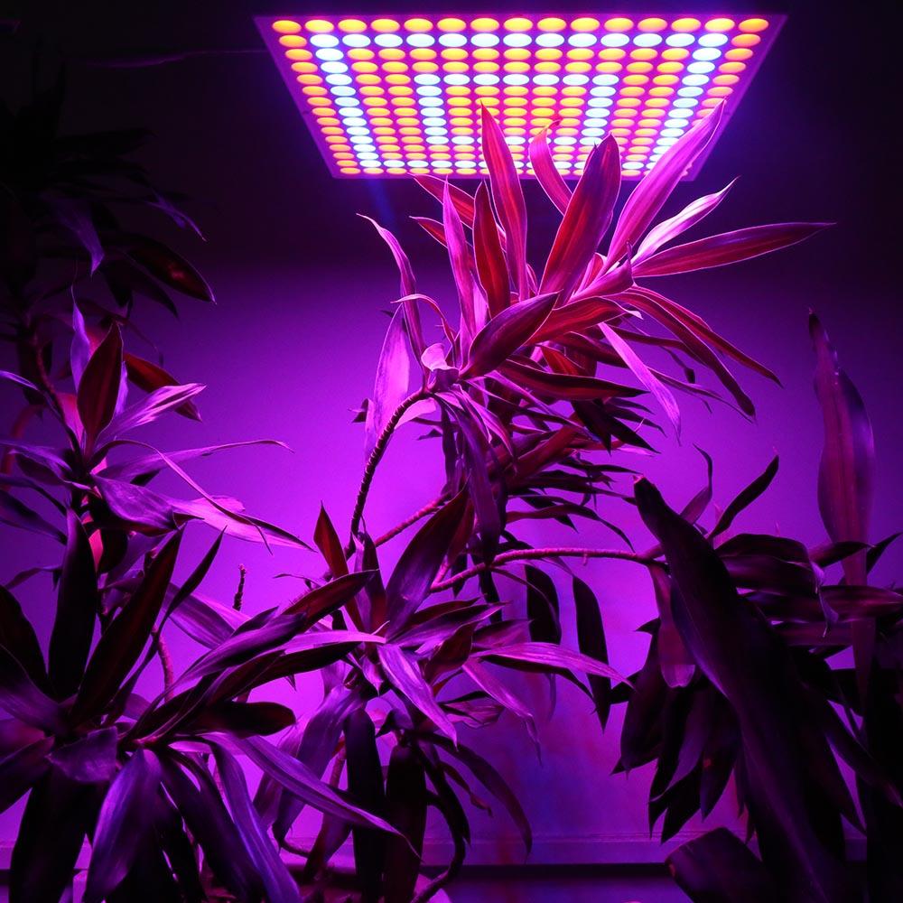 LED رشد گیاه و اکواریوم